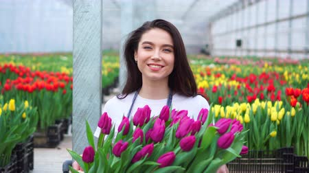 jardinero : Young beautiful woman greenhouse worker holds a box with blooming tulips in her hands and smiles. Archivo de Video