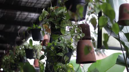 klimop : the hanging green plants neatly arranged, swaying in the wind Stockvideo