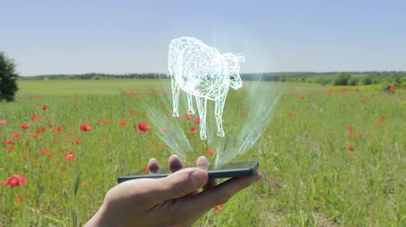 agricultural economy : Hologram of cow on a smartphone. Person activates the electronic 3D plan of farm on the field with flowering poppies