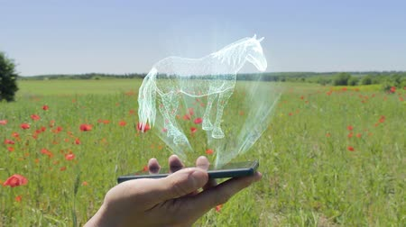 beygir gücü : Hologram of horse on a smartphone. Person activates the electronic 3D plan of farm on the field with flowering poppies