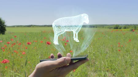 ewe : Hologram of sheep on a smartphone. Person activates the electronic 3D plan of farm on the field with flowering poppies Stock Footage