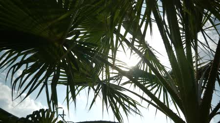 raios de sol : Palm leaves are swaying on the wind. Sun shining through palm leaves Stock Footage