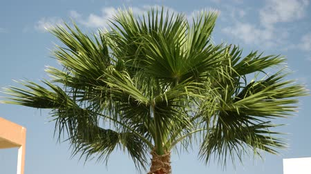 urlop : The top of palm tree against the background of the sunny sky and a building for rest. Palm tree against a blue sky with clouds and a hotel. View of a beautiful tropical background Wideo