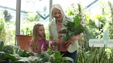 choise : Elderly woman buying plants with his granddaughter Stock Footage