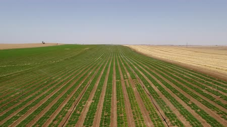 Irrigation system in the desert of Israel Stock Footage