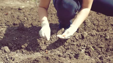 sowing : Hand of woman farmer seeding onions in garden.