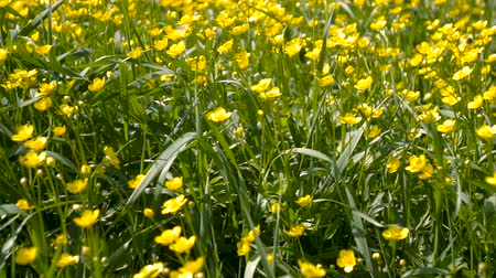 otsu : yellow wild flowers