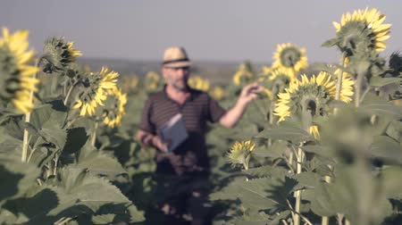 oneperson : Satisfied farmer in a sunflowers field looking at sunflower seeds. The farmer makes notes in his book