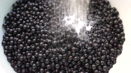fruity garden : flowing sugar in the bowl with blackcurrants