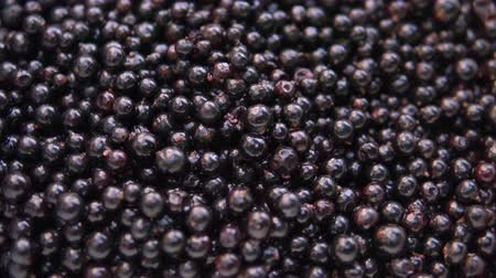 fruity garden : Fresh, ripe currant rotate, wild berry. Fresh blackcurrants in bowl. Stock Footage