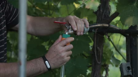 conector : Man connecting a hose pipe to an outside tap.