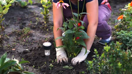 eyes closed : close up shot of a woman planting in her garden