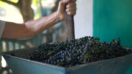 Vintner using manual vintage crusher on grapes, traditional artisanal wine.