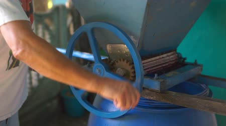 crush : Vintner using manual vintage crusher on grapes, traditional artisanal wine.