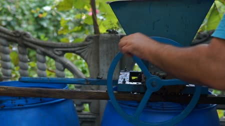 szőlőművelés : Vintner using manual vintage crusher on grapes, traditional artisanal wine.