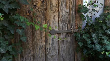 Green doors. Wood texture. Old wooden doors. Steadicam shot. Dostupné videozáznamy