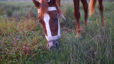 пони : Brown horse Beautiful landscape horses grazing