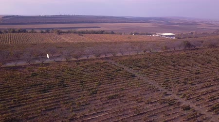 ekili : flight over vineyard in drone shot