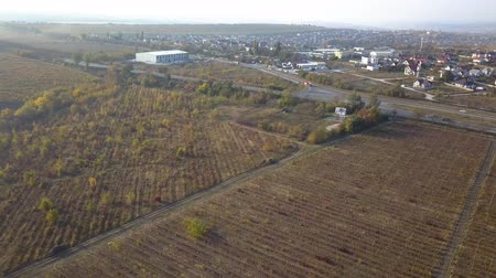 лоза : flight over vineyard in drone shot