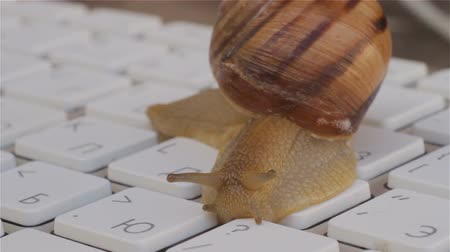 alegorie : Closeup of a Snail crawling slowly on the computer keyboard. Allegory and metaphor Low speed of the Internet