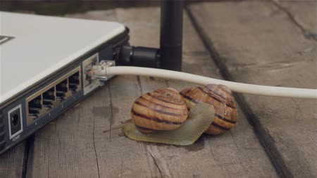 luxúria : Closeup of paired snails crawling beside Wireless router. Stock Footage