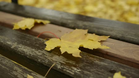 brilliant fall foliage : Yellow fallen leaves lie on a wooden bench in the city park and fly away from the whiff of wind