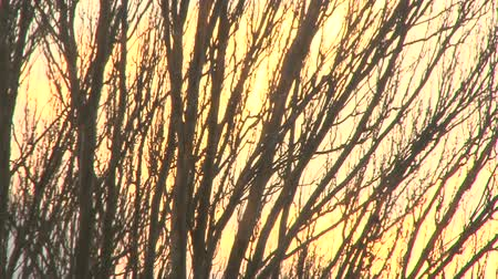 napfény : Branches of trees against the background of a winter sky at sunset