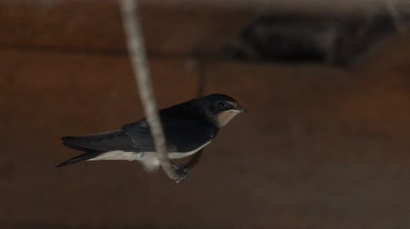 The titmouse sits on an electric wire