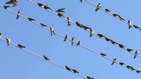 passer by : Birds Sitting On Electric Wires