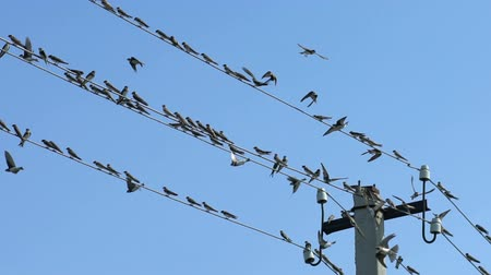 szervez : Birds sit on wires and fly away, Slow Motion Stock mozgókép