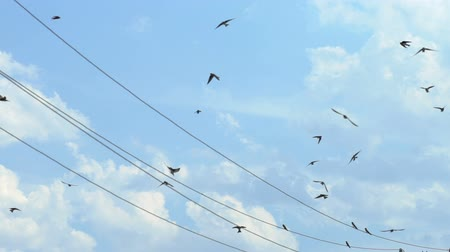 Sparrows fly next to electrical wires Stok Video