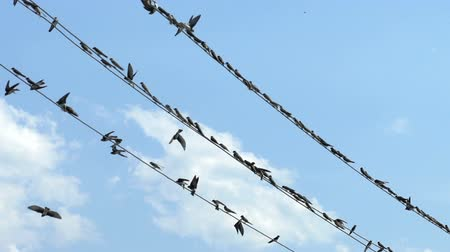 fazla : Birds sit on wires and fly away Stok Video