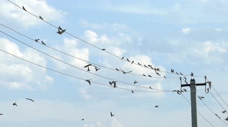 nyel : Birds sit on wires and fly away Stock mozgókép