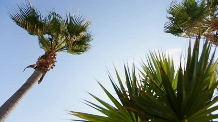 coconut palm tree : palm tree against the sky and wedding tent Stock Footage