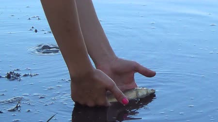 desistir : Girl hands hold fish and let it into pond water at summer