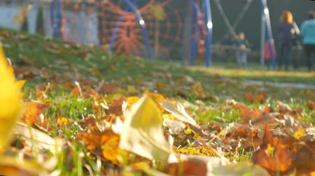 mamãe : Playground people relax Autumn park, forest trees. Fallen leaves Stock Footage
