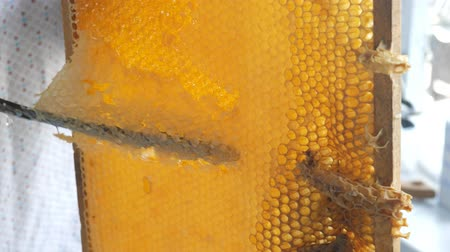 sealed : Hand using a knife to clog honeycombs with honey in a frame. Beekeeper Unseal Honeycomb.