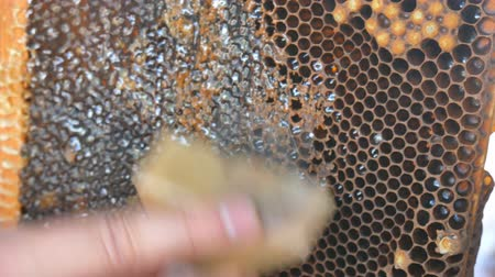 worker bees : Hand using a knife to clog honeycombs with honey in a frame. Beekeeper Unseal Honeycomb.