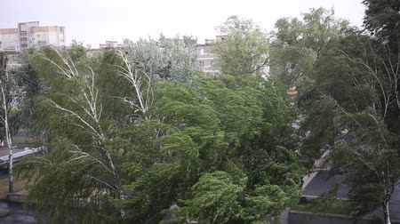 převrátit : Strong wind and rain on the street in the summer. The storm in the city. Green trees bend in the wind.