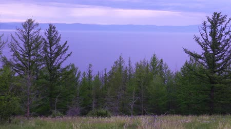 the forest shore of Lake Baikal
