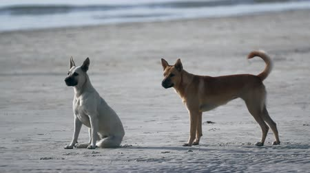 hiç kimse : Two dogs playing together at the beach
