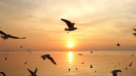 gaivota : Flock of Seagulls fly over sea in sunset