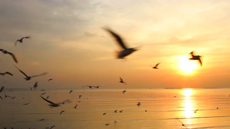 racek : Seagulls fly over sea in sunset