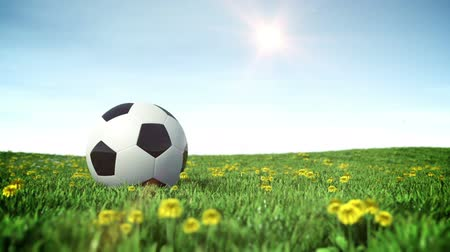 Soccer ball on a green grass field