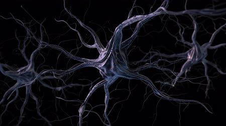 Realistic brain neurons. 3d animation