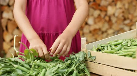 ervilhas : Young girl hands harvesting pea pods and collecting them in a wooden box - closeup, camera slide Vídeos