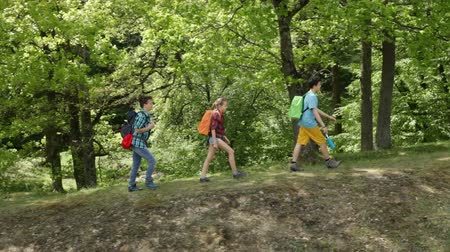 outdoor : Hikers walking on forest edge - teenagers and woman backpackers climbing hill, sunny trees in background Stock Footage