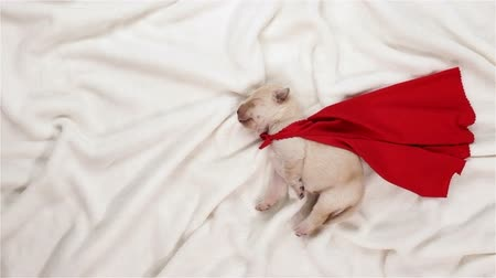 Newborn puppy dog dreaming of being a superhero - stretching in sleep