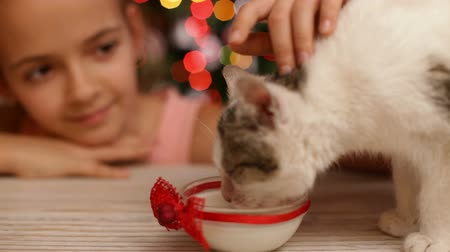 refocus : Cheerful girl watching small kitten eat milk at christmas time - xmas tree in background, closeup, camera refocus Stock Footage