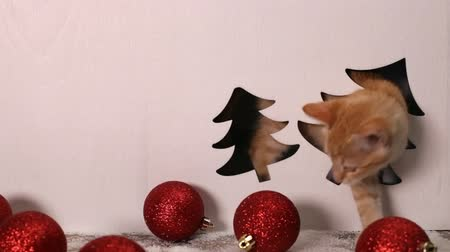 Cute kitten playing in christmas decorations setting playing hide and seek and chewing on the set - static camera Stock Footage